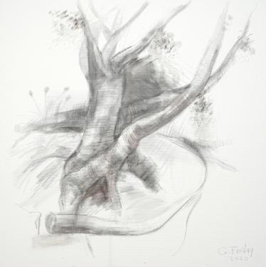 Baum im Botanischen Garten, 2020 | 100 x 100 cm, Bleistift mit Tusche laviert auf Leinwand